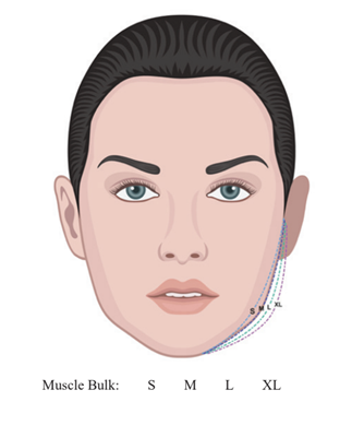 Jawline Muscle Size Illustration